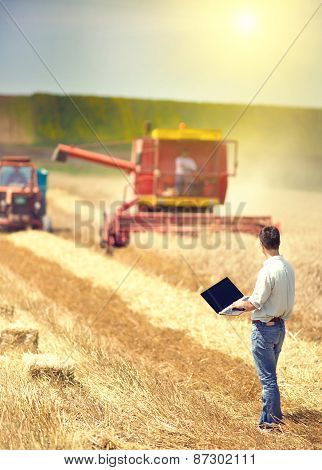 Businessman On Wheat Harvest