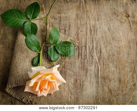 Delicate Cream Rose On Wooden Table With Sacking
