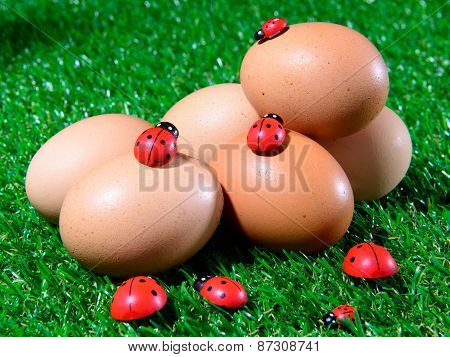 Six Fresh Eggs In The Grass