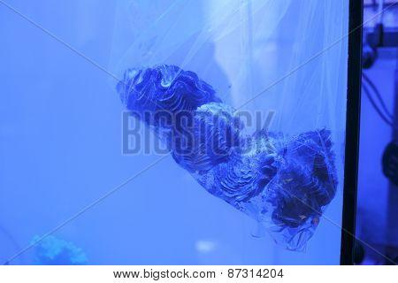 Giant Clams On Plastic Bag