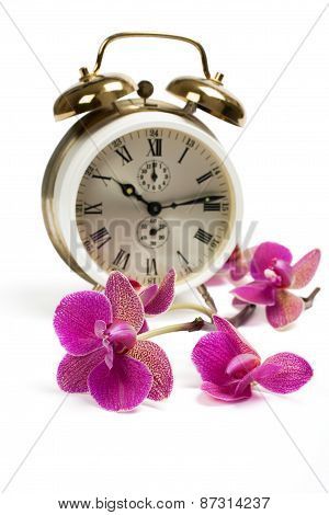 Alarm clock and pink streaked orchid flower