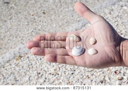 Hand Holding Small Seashells
