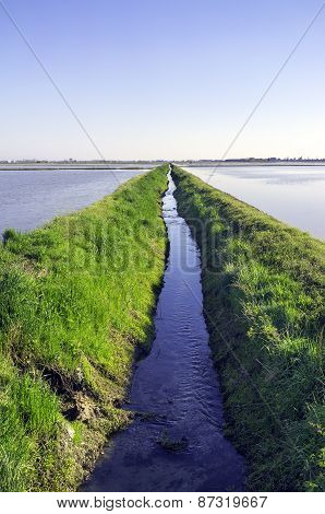 Paddy field in springtime. Color image