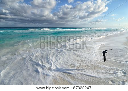 Seagull Flying Over White Sand Beach And Turquoise Sea Water