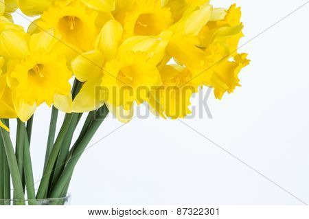 Yellow Daffodil Flowers In Vase