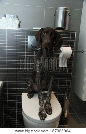 Pointer Potty Training