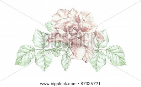 Rose Flower Twig