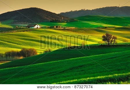 Trees And Farmland Near Volterra, Rolling Hills On Sunset. Rural Landscape. Tuscany, Italy