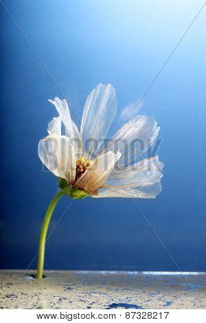 unusual flower on blue background