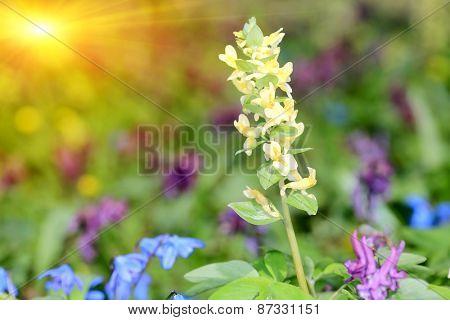 Nice spring flowers on meadows