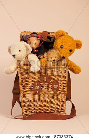 Stuffed hand made bears in toy box on beige background