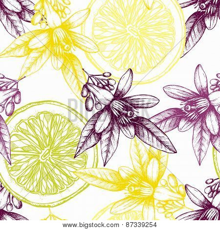 Vintage citrus background isolated on white