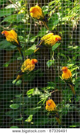 Colorful parrots in safari world, Bangkok Thailand