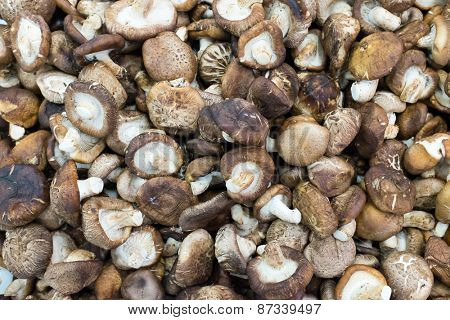 Raw mashrooms natural background at thailand market of samui island