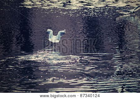 Seagull Flew Up Over Water Lakes