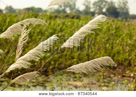 View of Indian Agriculture Field