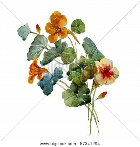 Nasturtium watercolor