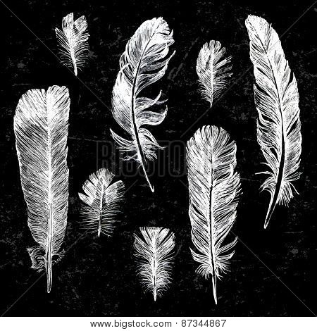 Hand drawn feathers set on black background