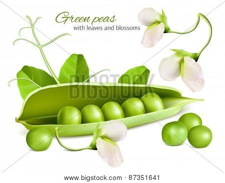 Green peas wiyh leaves and blossoms. Vector illustration