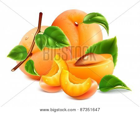 Apricots with green leaves. Vector illustration.