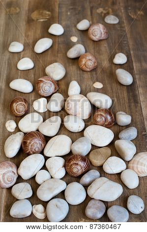 Pebble And Shells On The Distress Wooden Background