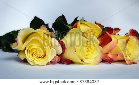 Yellow roses.
