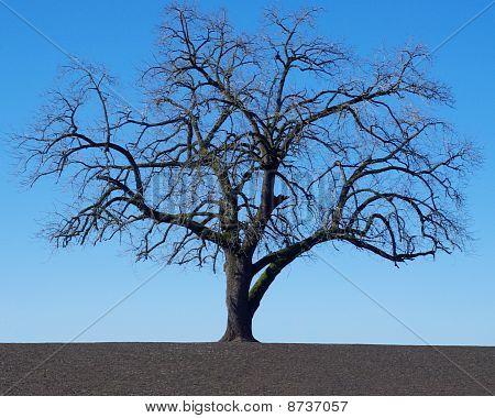 Tree Alone In Field