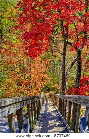 Wooden Stairs In Autumn Forest.