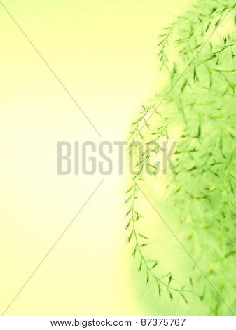 Abstract Floral Yellow Green Background Texture