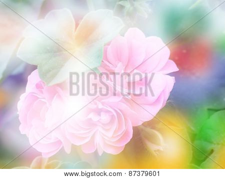 Double Exposure Geranium Flower With Bokeh Background