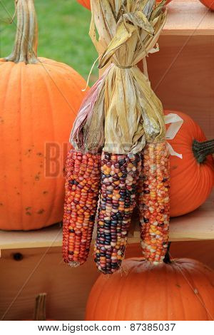 Indian corn and pumpkins