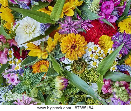 variety of colorful flowers closeup