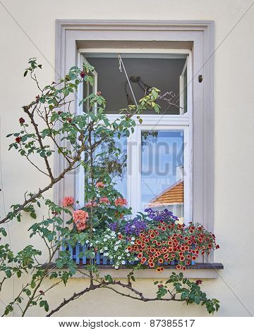 home window and flowers Bamberg Germany