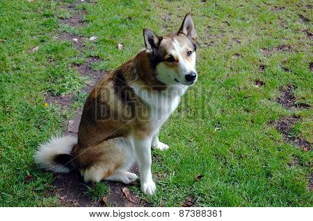 A dog sitting on a meadow
