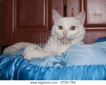 White Cat Lying On Blue Cushion On Cabinet