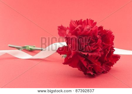 Single Flower, Red Carnation With White Ribbon On Red Background.