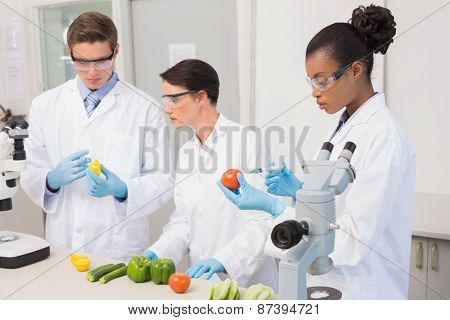 Scientists examining vegetables in laboratory