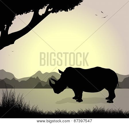silhouette of rhinoceros