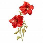 pic of petunia  - Beautiful vector illustration with nice petunia flowers - JPG