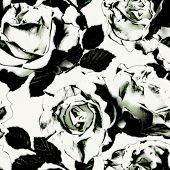 pic of garden-art  - art vintage monochrome graphic floral seamless pattern with white roses on white background in black and white colors - JPG