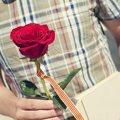 Постер, плакат: a young man with a red rose and the catalan flag and a book for Sant Jordi the Saint Georges Day