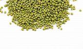 foto of legume  - Vigna radiata Plants legumes small cooking and beverages - JPG