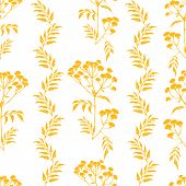 foto of tansy  - Beautiful vector pattern with nice tansy flowers - JPG