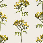 stock photo of tansy  - Beautiful vector pattern with nice tansy flowers - JPG