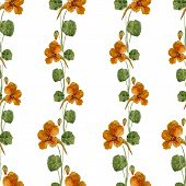 stock photo of nasturtium  - Beautiful vector pattern with nice watercolor nasturtium - JPG