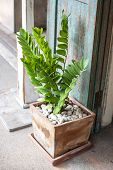 stock photo of pottery  - Green leaf of zamioculcas zamifolia in pottery with gravel - JPG