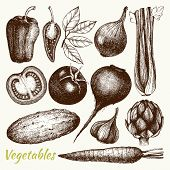 pic of vegetables  - Vector collection of ink hand drawn vintage vegetables - JPG