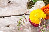 foto of buttercup  - Persian buttercup flowers  - JPG