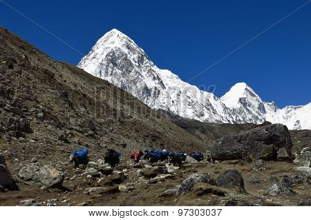 Yak Caravan Comming From Everest Base Camp And Snow Covered Pumo Ri