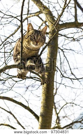 cat is sitting high on the tree
